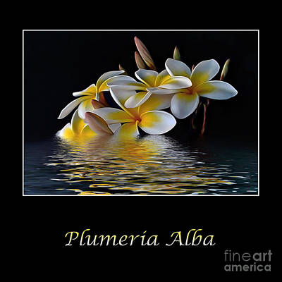 Reflection On Pond Photograph - Plumeria Alba by Kaye Menner