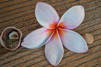 Photograph - Plumeria And Shells by Dan McManus