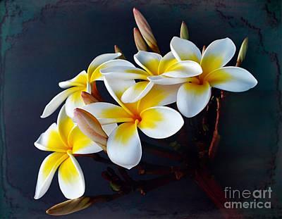 Plumeria Bouquet 2 Print by Kaye Menner