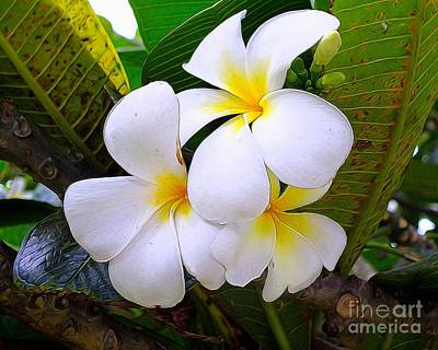 Popstar And Musician Paintings Royalty Free Images - Plumeria Bouquet Royalty-Free Image by Scott Cameron