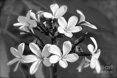 Photograph - Plumeria Bouquet by Suzanne Oesterling