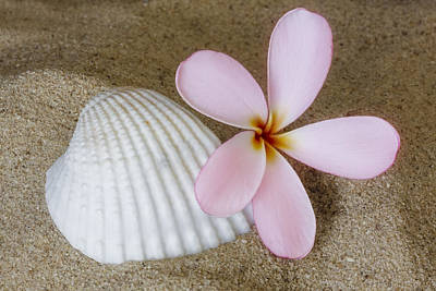 Photograph - Plumeria Flower And Sea Shell by Susan Candelario