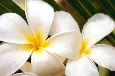 Photograph - Plumeria Impression by Dan McManus