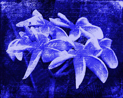 Photograph - Plumeria In Indigo by Karen Stephenson
