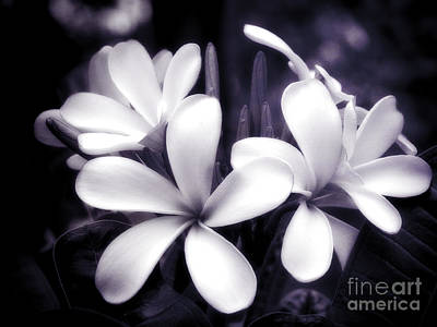 Through The Viewfinder - Plumeria by Karen Lewis