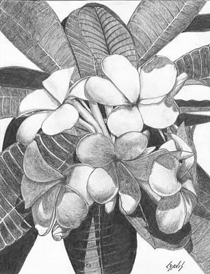 Drawing - Plumeria by Lew Davis