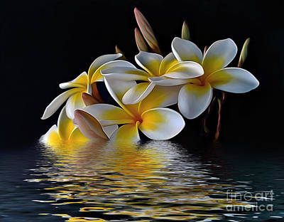 Photograph - Plumeria Reflections by Kaye Menner