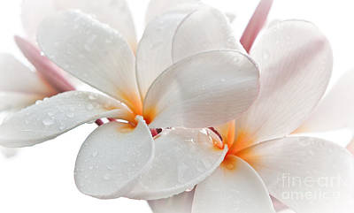 Photograph - Plumeria by Roselynne Broussard