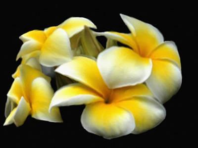 Plumeria Yellow And White Art Print by Dennis Buckman