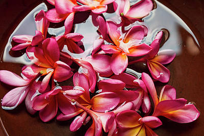 Jogjakarta Photograph - Plumerias In A Bowl At Saptohoedojo Art by Peter Langer