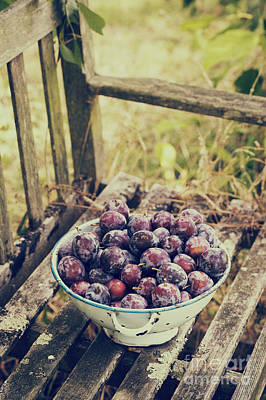 Lomo Photograph - Plums by Tim Gainey