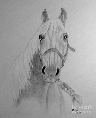 Drawing - Pm 330-62 Peggy Miller Horse 14x17 Graphite by Peggy Miller