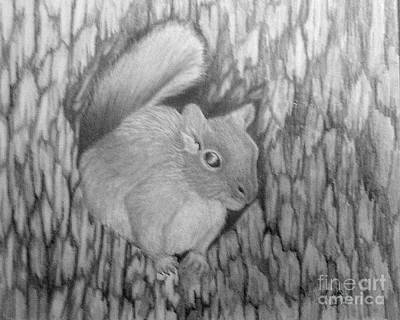 Drawing - Pm 330-63 14x17 Graphite  Grey Squirrel by Peggy Miller
