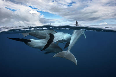 Dolphin Wall Art - Photograph - Pod Of Dolphin At The Surface by Barathieu Gabriel
