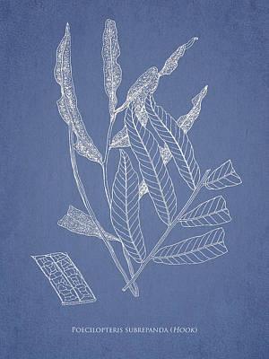 Poecilopteris Subrepanda Art Print