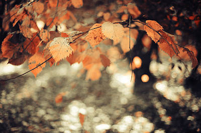 Photograph - Poetry Of Autumnal Leaves by Jenny Rainbow