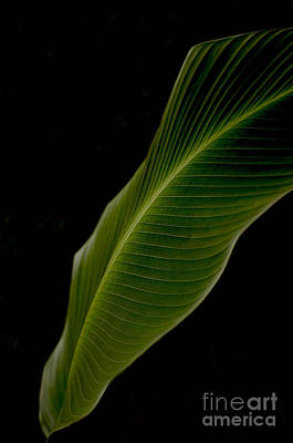 Digital Art - Poetry Of Leaf by Leo Symon