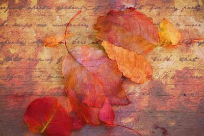 Photograph - Poetry Of Leaves by Alice Gipson
