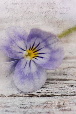 Pansy Photograph - Poetry by Priska Wettstein