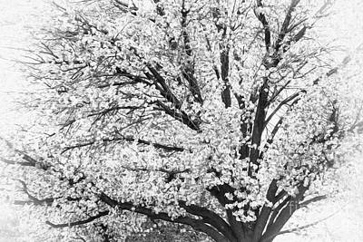 Art Print featuring the photograph Poetry Tree by Roselynne Broussard