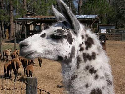 Photograph - Polka Dot Llama Pogo Rules by Belinda Lee