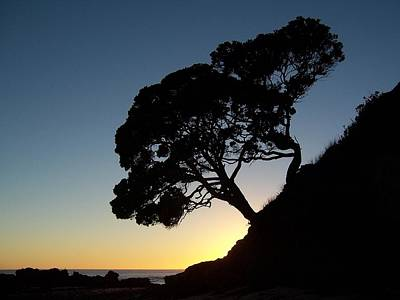 Photograph - Pohutukawa Trees At Sunrise by Peter Mooyman