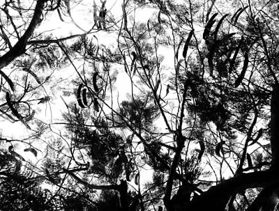 Art Print featuring the photograph Poinciana Lace by Amar Sheow