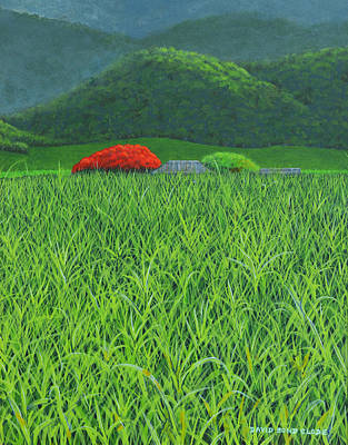 Painting - Poinciana Tree Sugar Cane Farm Australia by David Clode