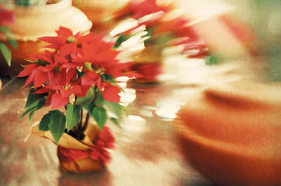 Photograph - Poinsettia by Celso Bressan