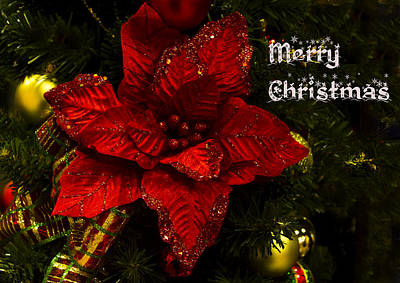 Photograph - Poinsettia Christmas Greeting Card  by Mark Andrew Thomas