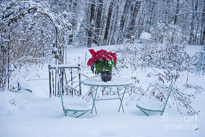 Poinsettia In The Snow Art Print by Alana Ranney