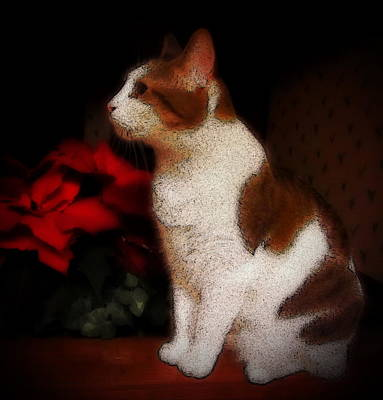 Kitty Photograph - Poinsettia Kitty by Cathy Lindsey