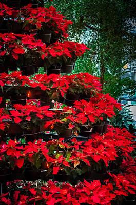 Photograph - Poinsettia Tree Display by Gene Sherrill