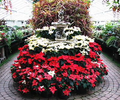 Photograph - Poinsettias At Botanical Gardens With Oil Painting Effect by Rose Santuci-Sofranko