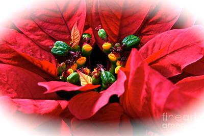 Photograph - Poinsettia's Festive Heart by Byron Varvarigos