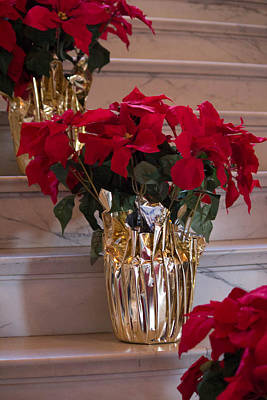 Photograph - Poinsettias by Patricia Babbitt