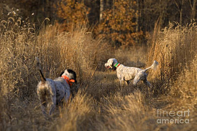 Gun Dog Photograph - Point And Honor - D009273 by Daniel Dempster