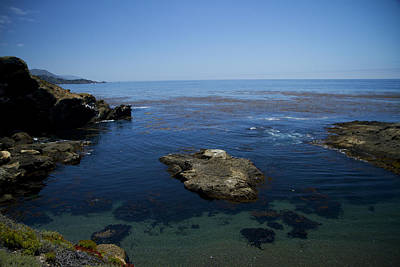 Photograph - Point Lobos 1 by Tom Kelly