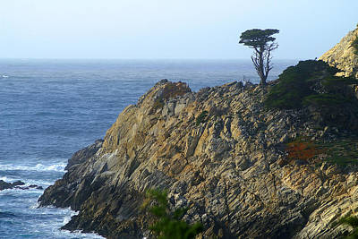 Photograph - Point Lobos Cypress by David Armentrout