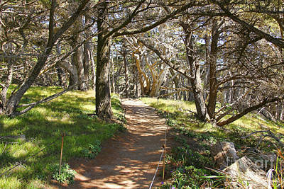 Point Lobos Reserve Photograph - Point Lobos Cypress Path by Jack Schultz