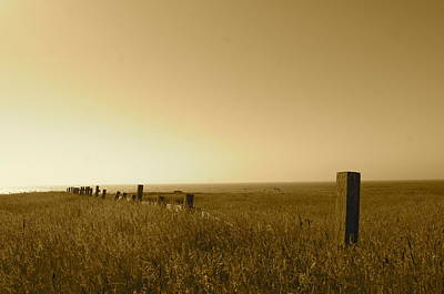 Photograph - Point Reyes Field by Colleen Renshaw