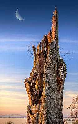 Dead Tree Trunk Digital Art - Pointing To The Heavens by Brian Wallace