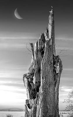 Dead Tree Trunk Digital Art - Pointing To The Heavens - Bw by Brian Wallace