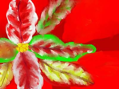 Pointsettia Art Print by Doris Culverhouse