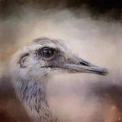 Poised - Ostrich - Wildlife Art Print by Jai Johnson