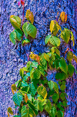 Poison Sumac Photograph - Poison Ivy by Brian Stevens