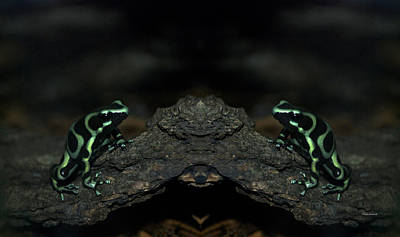 Salamanders Digital Art - Poisonous Green Frogs Mirror Image by Thomas Woolworth