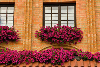 Petunia Photograph - Poland, Gdansk Window Boxes With Purple by Jaynes Gallery