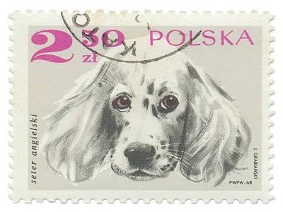 Springer Spaniel Painting - Poland Stamp Iv On White by Wild Apple Portfolio