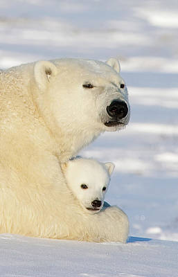 Polar Bear And 12 Week Old Cub Art Print by Matthias Breiter